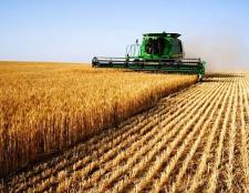 День сільського господарства: сценарій. День сільського господарства: привітання