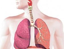 Дихання - це ... Будова і функції органів дихання