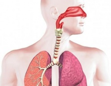 Дихальна система: функції і фактори захисту