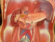 Ферменти для підшлункової залози: препарати. Травні ферменти підшлункової залози
