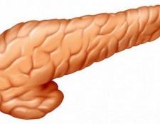 Де знаходиться підшлункова залоза у людини? Будову і функції підшлункової залози