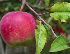 Яблуко - калорійність дуже низька, а користь - колосальна!
