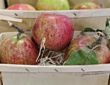 Як зберігати яблука на зиму? Зберігання яблук взимку за всіма правилами