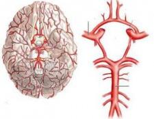 Кровопостачання головного мозку. Порушення кровопостачання головного мозку