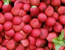 Лічі: фрукт, «дає радості життя»