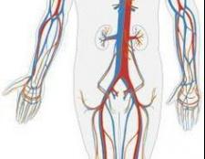 Мале коло кровообігу: як відбувається циркуляція?