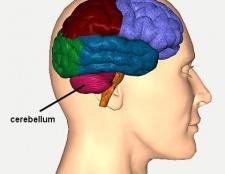 Мозочок: функції і будова