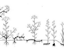Основні життєві форми рослин