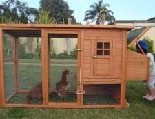Вирішили побудувати курник на дачі