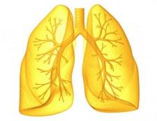 Системи органів людини. Органи і системи органів