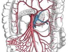 Воротна вена: кровоносні шляхи, захворювання, діагностика і методи лікування